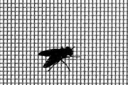 szúnyogháló léggyel